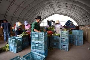 取材当日は減農薬有機栽培のトウモロコシの収穫が終盤。全国の顧客へ送り終わった頃には、ジャガイモの収穫時期だ。