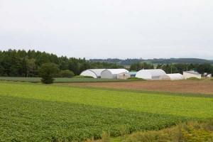 露地畑のほか、トマトのハウス、出荷作業のための建物や予冷庫などが立ち並ぶ、大農場だ。白、黒、緑と大豆品種の違いが畑を色分けする。