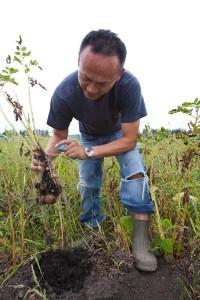 火山灰の多い土に与えるのは緑肥のみ。土壌中の微生物のデータは、大学の研究者によって蓄積されている。