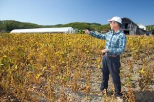 畑では黒大豆、食卓では黒豆。北海道で主流の品種「光黒」が黒豆茶になる。