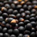 よく干した豆が3〜4分でパチリ、パチリ、とはぜ始める。のぞいた実にうすく色がつき、豆のおいしそうな匂いが香ばしさに変われば完成だ。